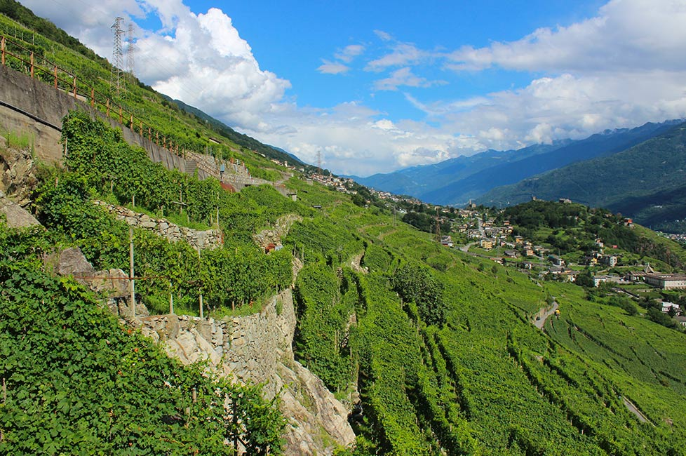 nutritionist tour with visit to the vineyards in Sondrio